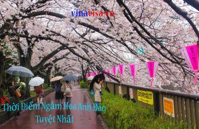 https://vinavisa.vn/nen-ngam-hoa-anh-dao-tai-nhat-ban-vao-thoi-gian-nao-lich-du-doan-hoa-anh-dao-no/